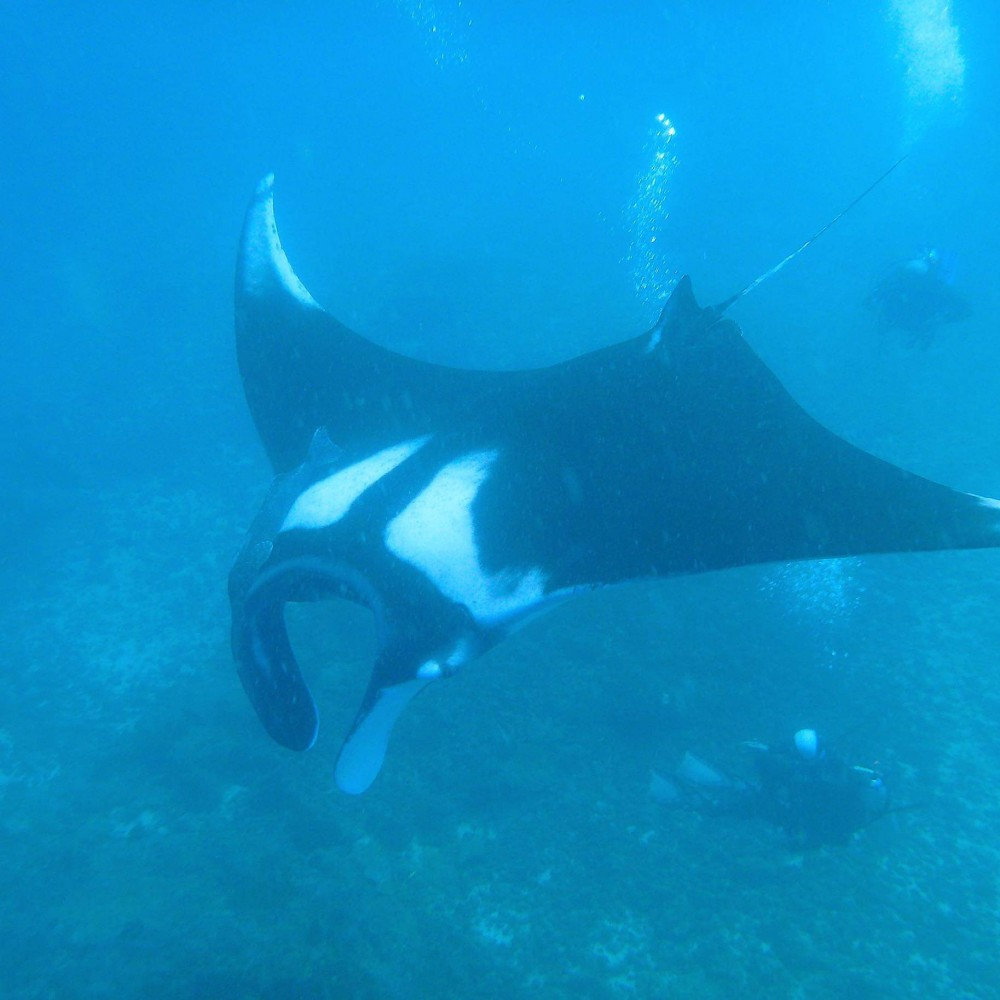 Jane Nemo 1